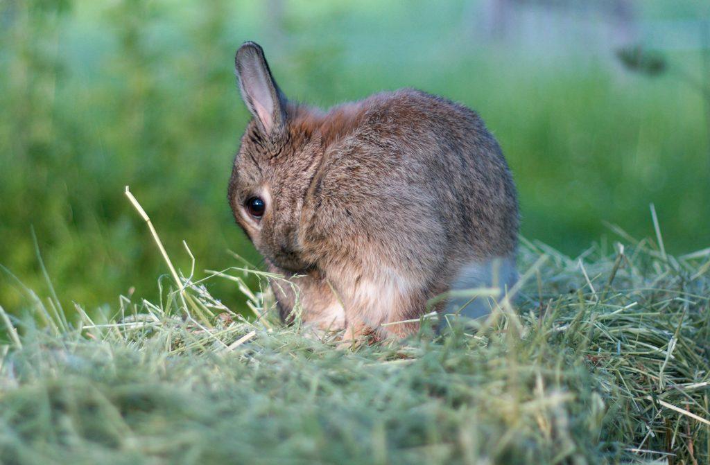 Heu für Hasen und Kleintiere